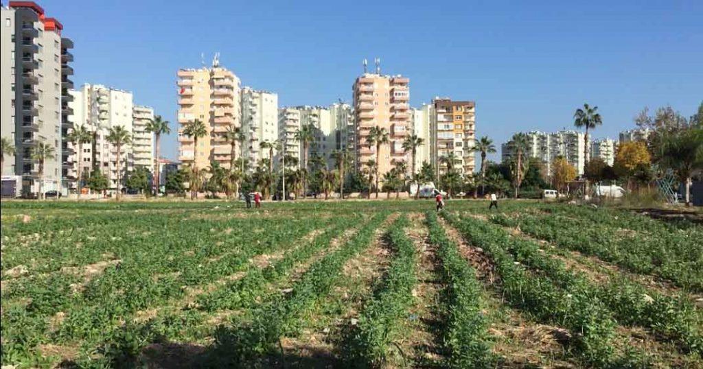 Kurumuş topraklardan can bulan yapraklara: Kadınların Kent Tarımı