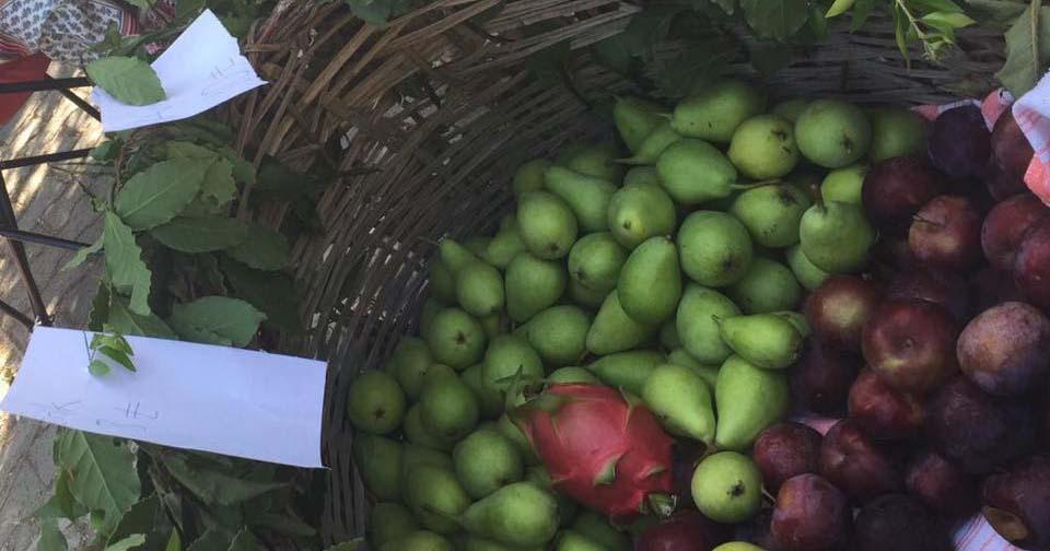 Armudun sapı üzümün çöpü bir de elmanın kurdu